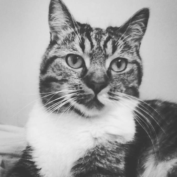 To właśnie kot Scott.
