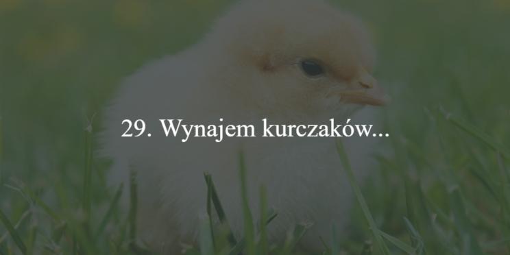 wynajem kurczakow